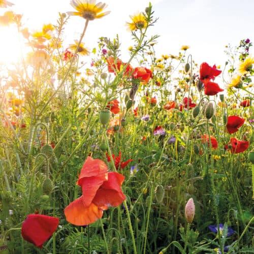 bloemenpluktuin-01-Groot_Twentsch_maisdoolhof_Slider-01_verdwalen-in-het-mais