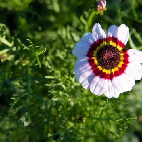 Twentsche-Bloemenpluktuin-Pluk-wilde-bloemen-fleringen