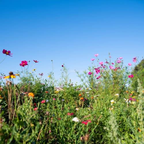 Twentsche-Bloemenpluktuin-Pluk-wilde-bloemen-twente