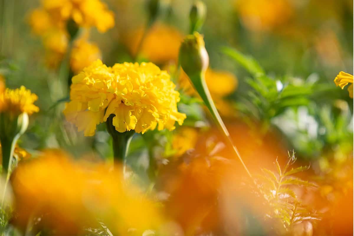 Twentsche-Bloemenpluktuin-gezellig-bloemen-plukken