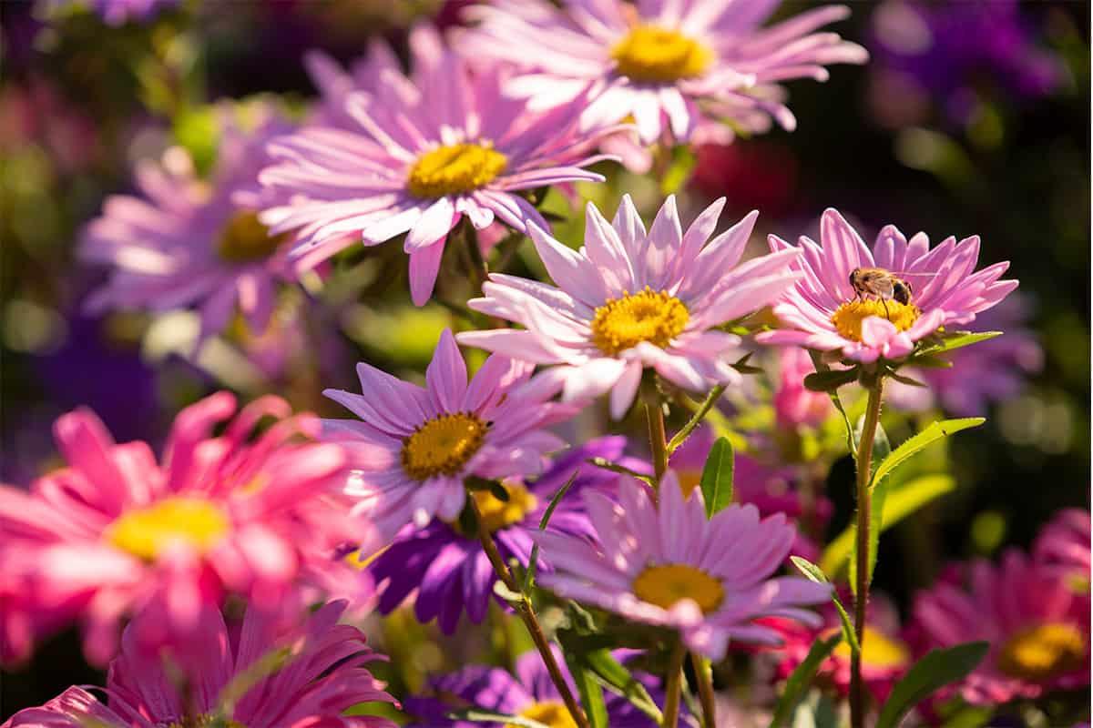 Twentsche-Bloemenpluktuin-prachtige-kleurrijke-bloemen