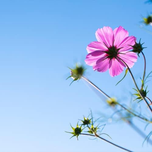 Twentsche-Bloemenpluktuin-samen-bloemen-plukken